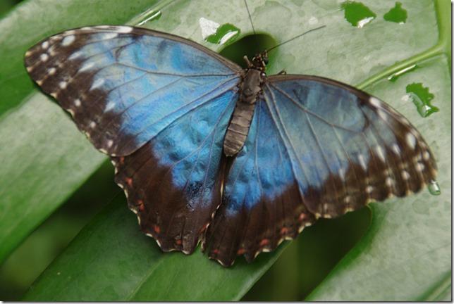 La Serre aux Papillons - Vannes (28)