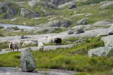 Norvège (77)